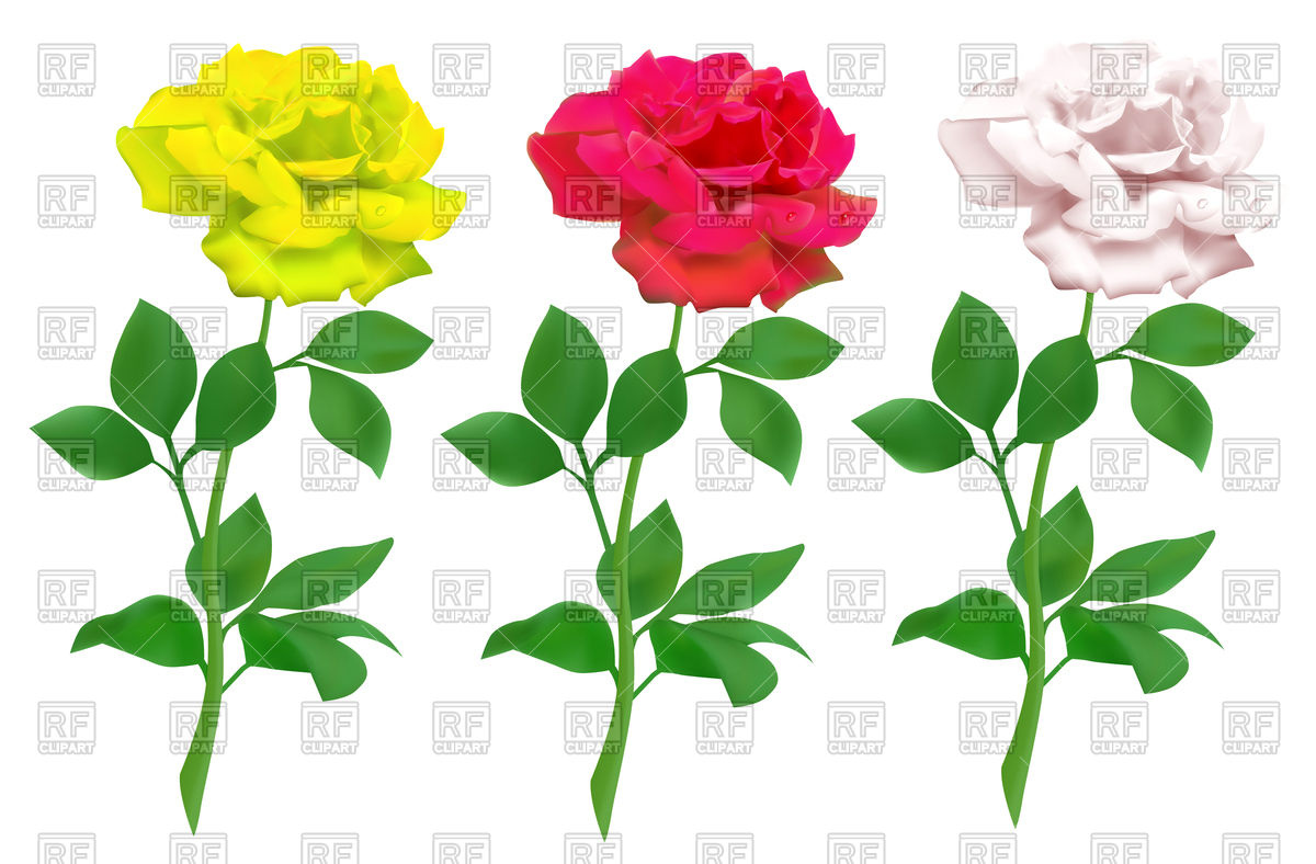 1200x788 Red Rose Clipart Green Rose 3846902
