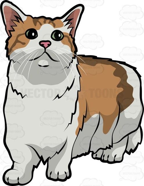497x640 A Munchkin Cat Cartoon Clipart Vector Toons