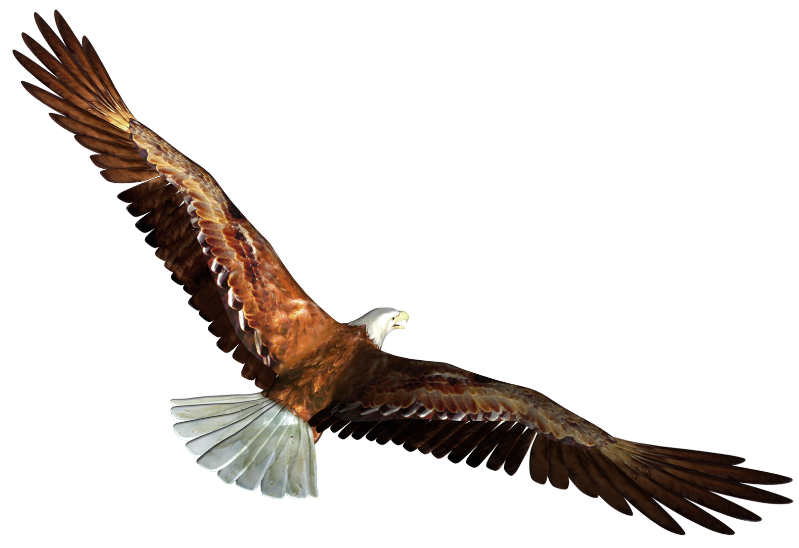 1580x1085 Eagle In Flight Transparent Png Pictureu200b Gallery Yopriceville