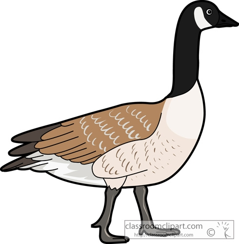 490x500 Clip Art Goose Clip Art Flying Geese Clipart Kid 2 Image Hnolsv3