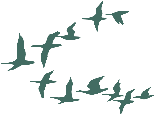 600x450 Teal Flock Of Geese Clip Art