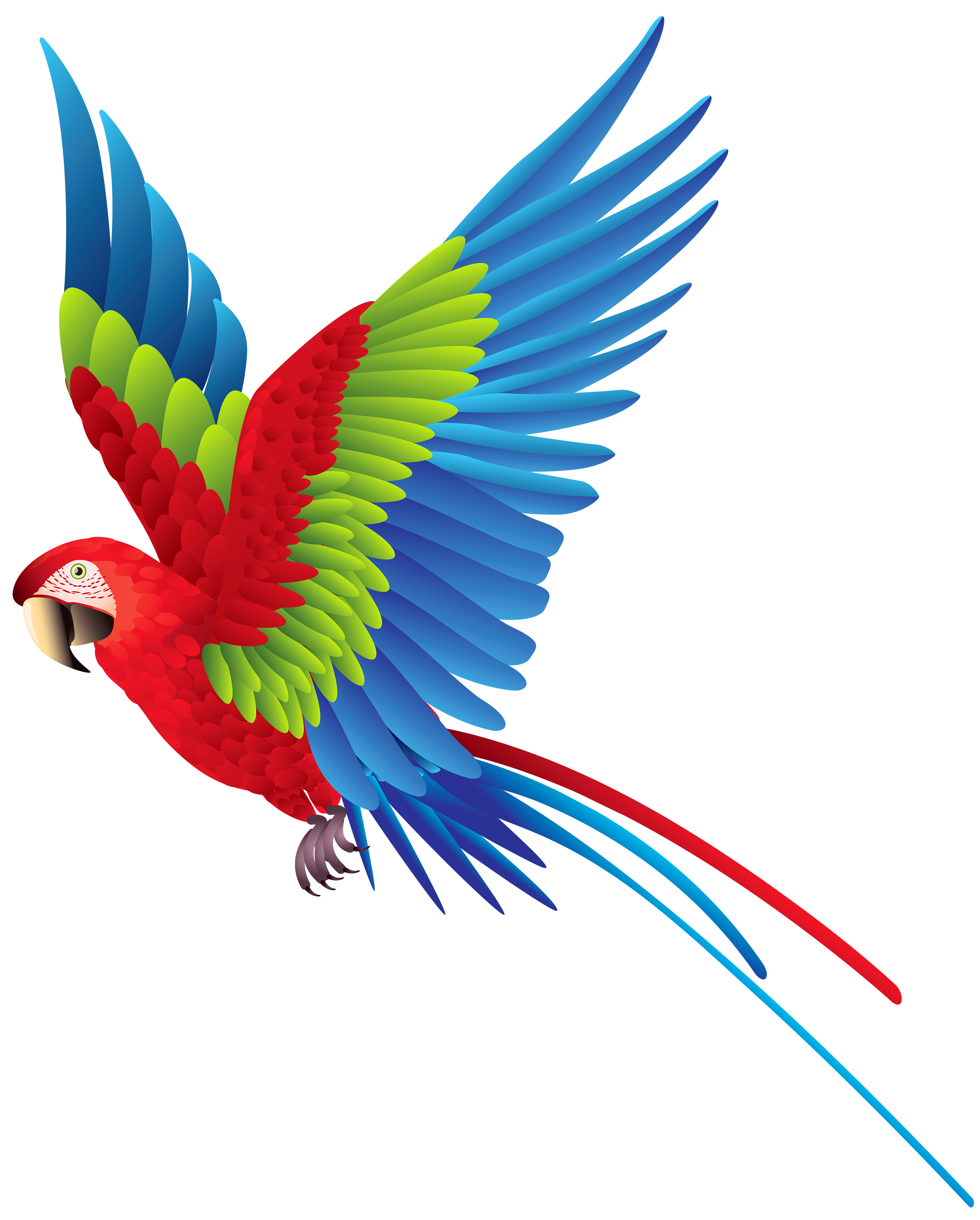Flying Parrot Clipart at GetDrawings | Free download