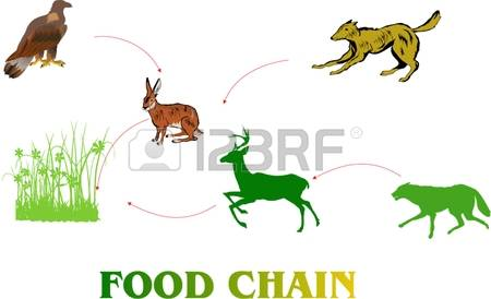 450x274 Food Chain Clipart Free Download Clip Art