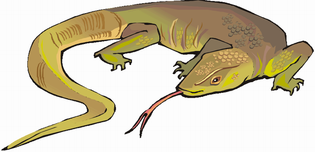 620x300 Lizard Coloring Pages