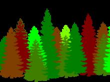 220x165 Forest Cliparts Clip Art Forest Clipart Clipart For Teachers