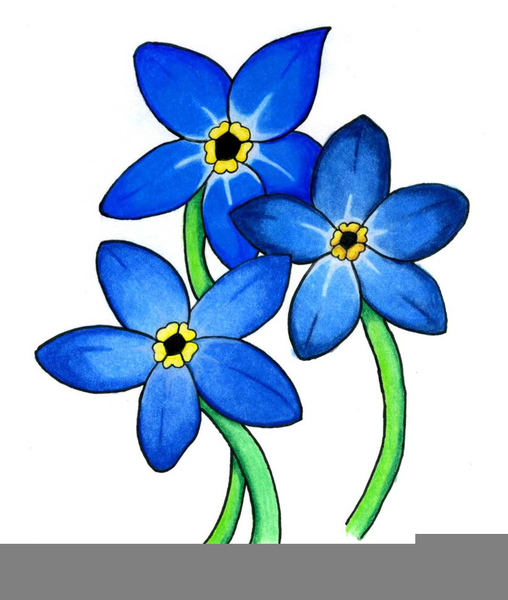 508x600 Forget Me Not Clipart Free Images