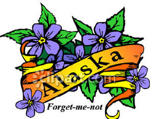 300x234 State Flower Of Alaska, The Forget Me Not Royalty Free Clipart Picture