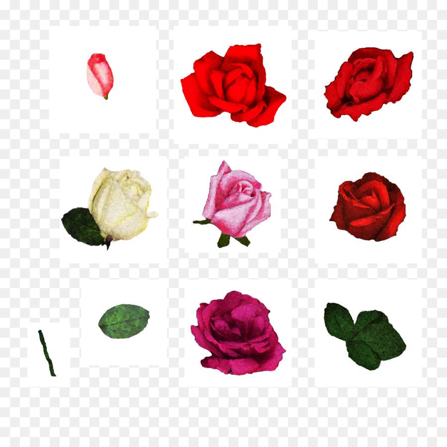 900x900 Cut Flowers Centifolia Roses Floral Design Garden Roses