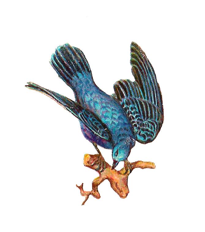 669x757 Bluebird Clipart