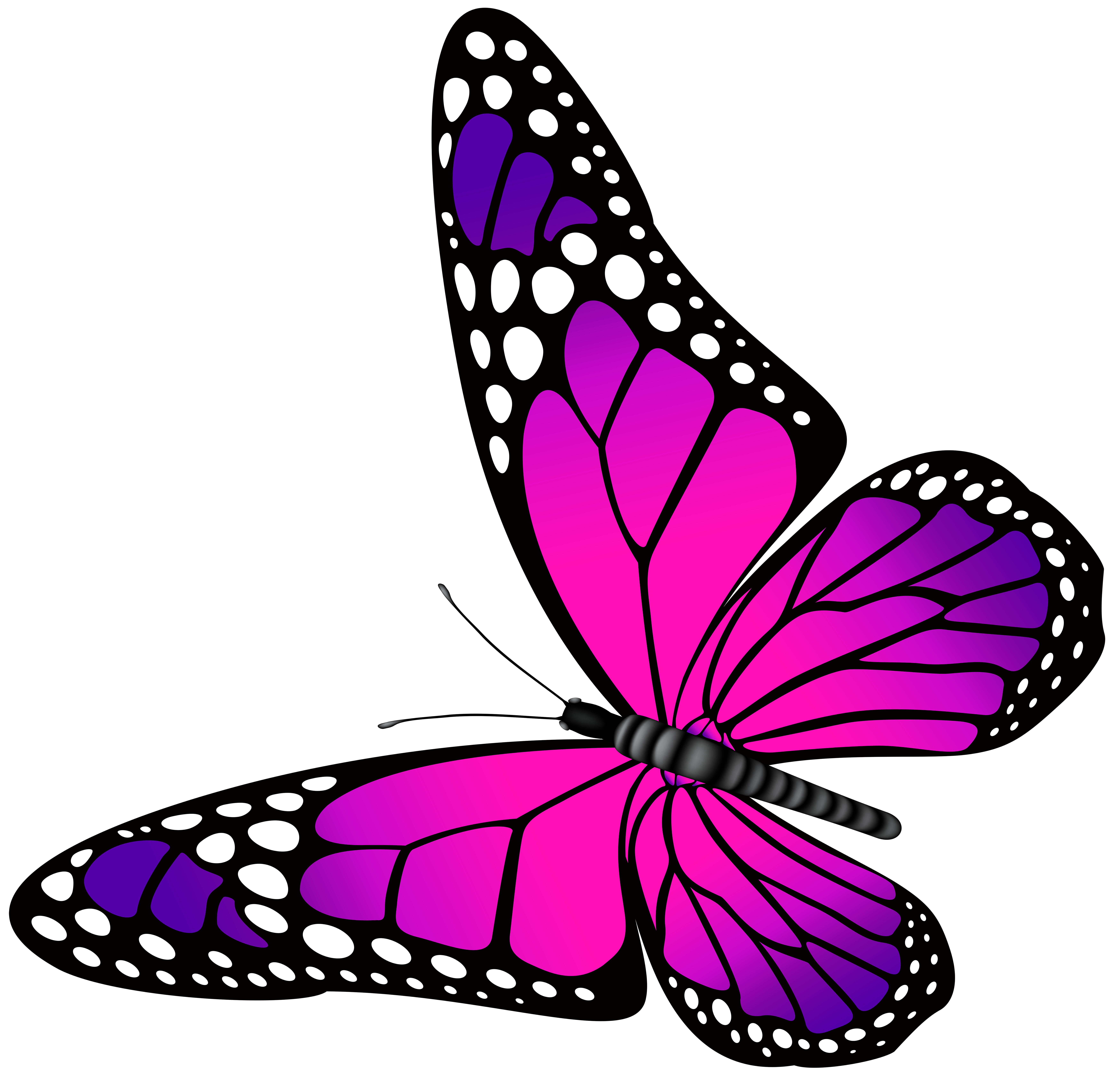free butterfly clipart for kids at getdrawings com free for rh getdrawings com