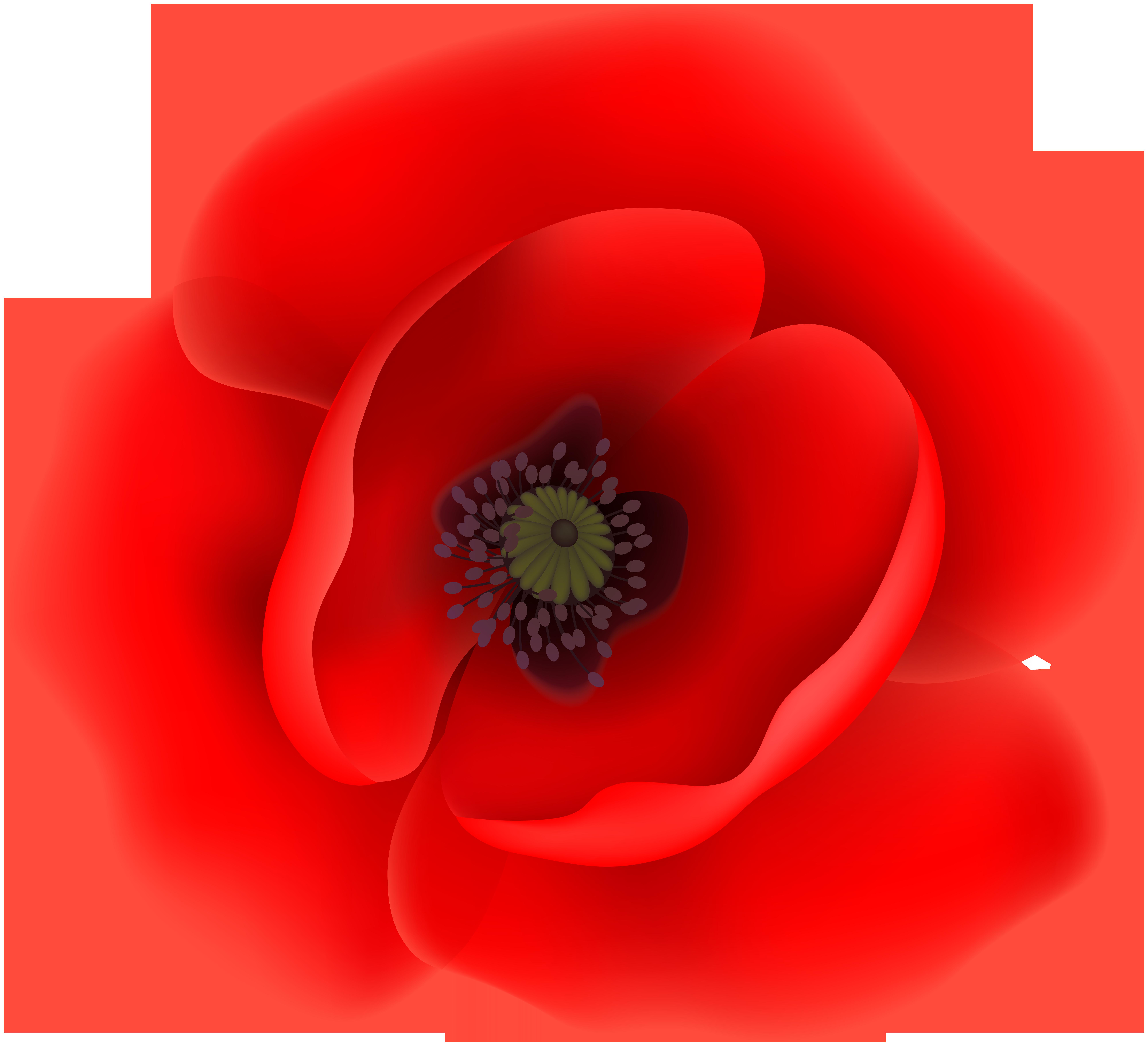 8000x7288 Poppy Flower Clip Art Transparent Imageu200b Gallery Yopriceville
