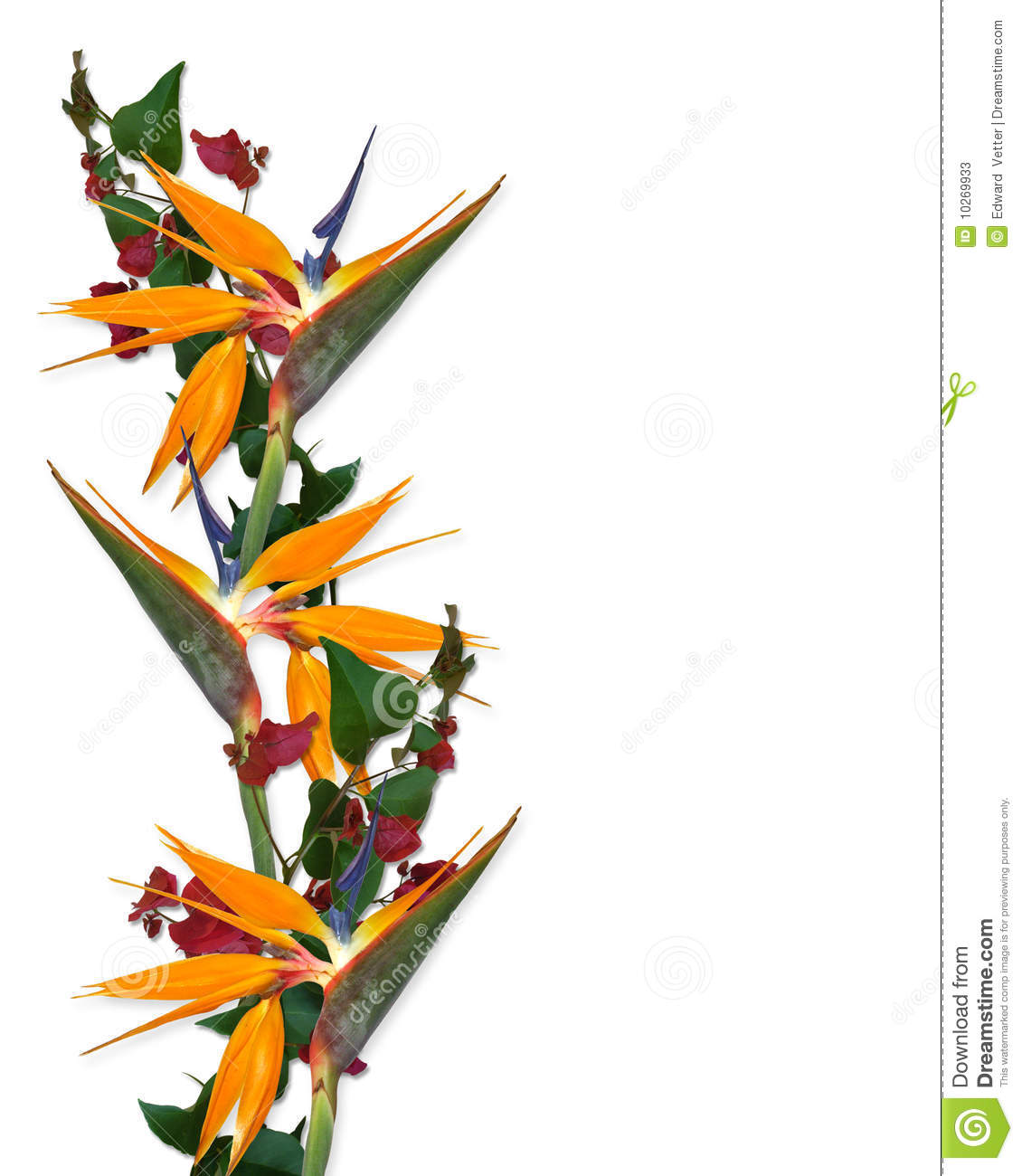 1130x1300 Tropical Flowers Clip Art Border