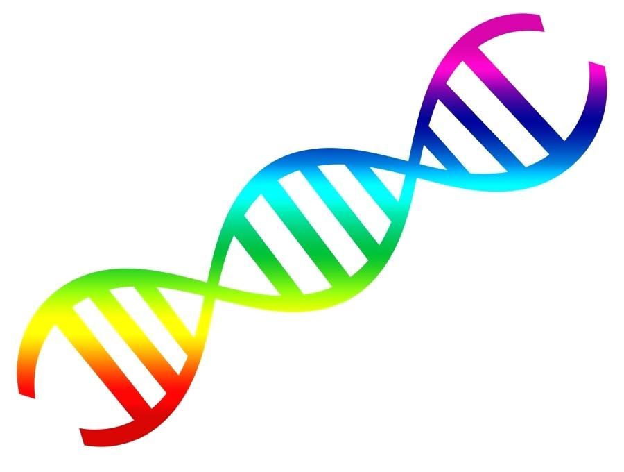 900x680 Double Helix Clip Art Nucleic Acid Double Helix Clip Art Vector