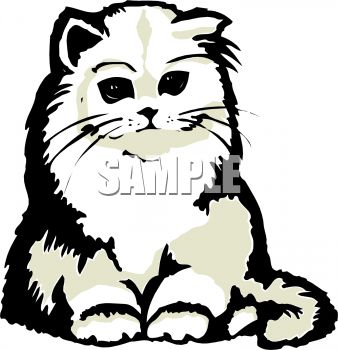 338x350 Cute Furry White Cat