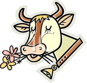 300x284 Cow Wearing A Cowbell Chewing On Daisies