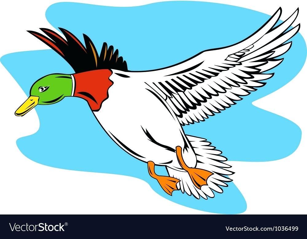 1000x780 Mallard Duck Clip Art Themusicfoundry Future