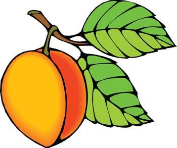 350x293 Peach Clipart Image Clip Art Library