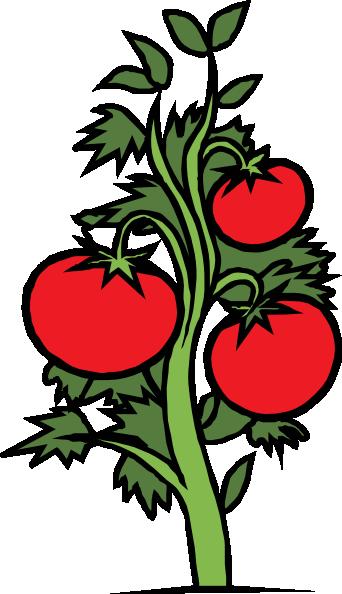 342x594 Tomato Plant Clip Art Free Vector