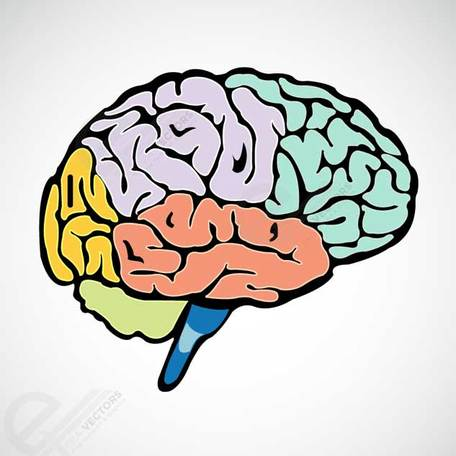 456x456 Free Human Brain Clipart And Vector Graphics