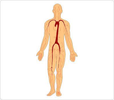 401x351 Human Body Clip Art Free Clip Art