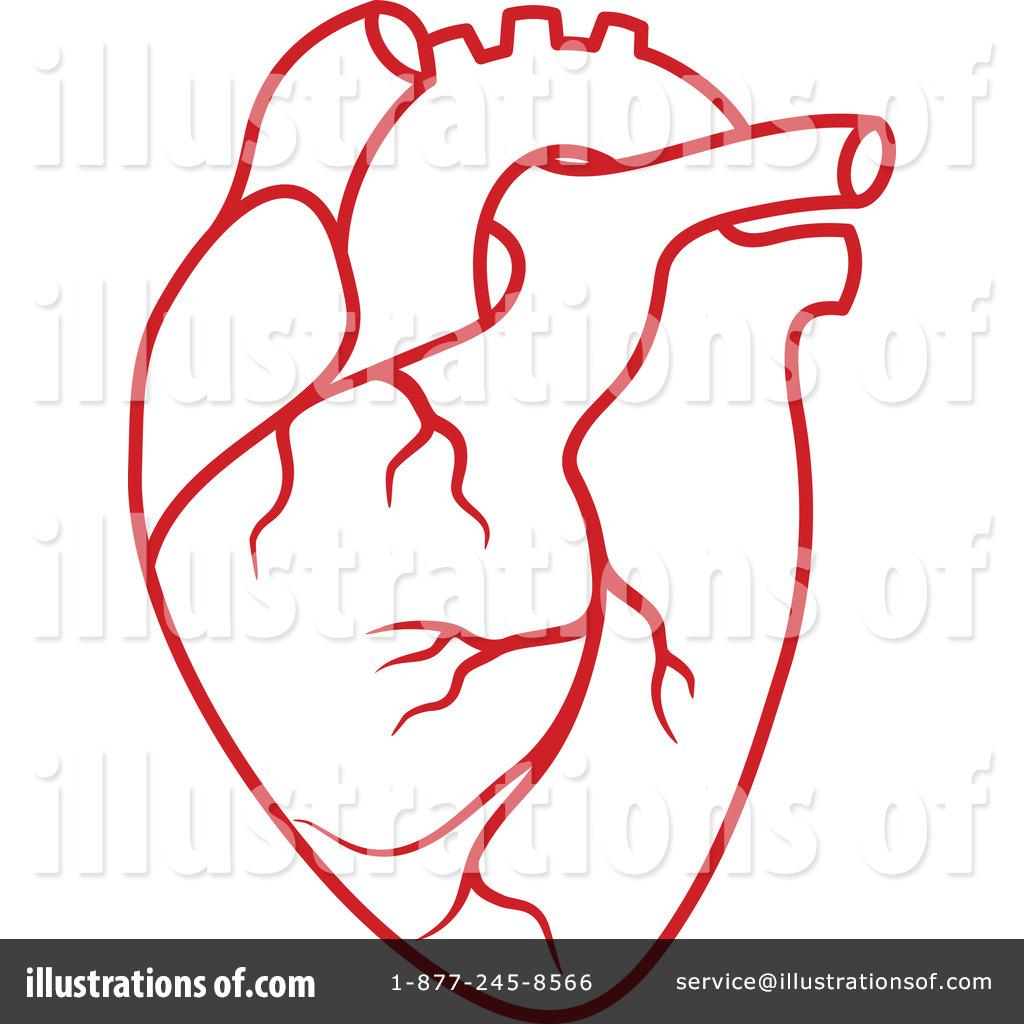 1024x1024 Human Heart Clipart