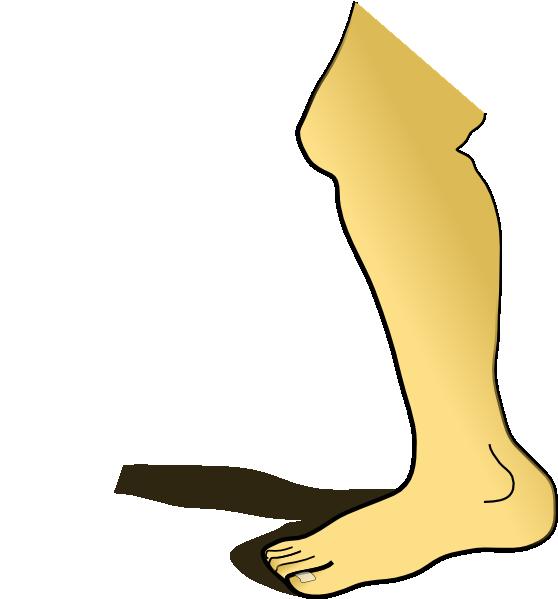 558x599 Image Of Anatomy Clipart