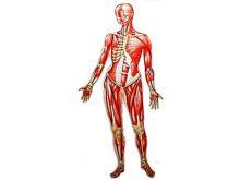 220x165 Human Body Clip Art Human Anatomy Clipart Anatomy Clipart Human