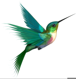 288x300 Free Clipart Hummingbird Free Images