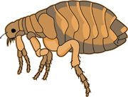180x137 Free Insect Clipart