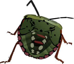 300x258 Stink Bug Clip Art