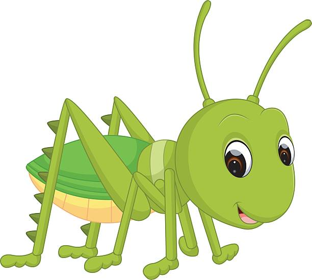612x548 Brown Cricket Insect Clipart