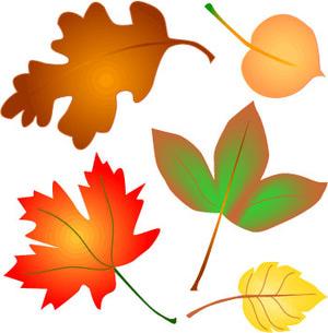 300x305 Free Leaf Clipart Free Download Clip Art