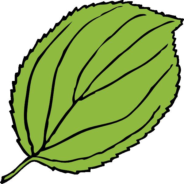 600x600 Serrate Leaf Clip Art Free Vector 4vector