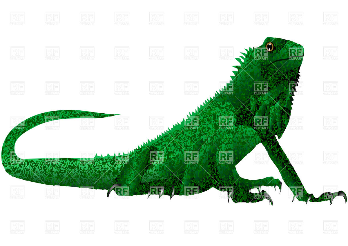 1200x849 Green Iguana (Lizard) Royalty Free Vector Clip Art Image