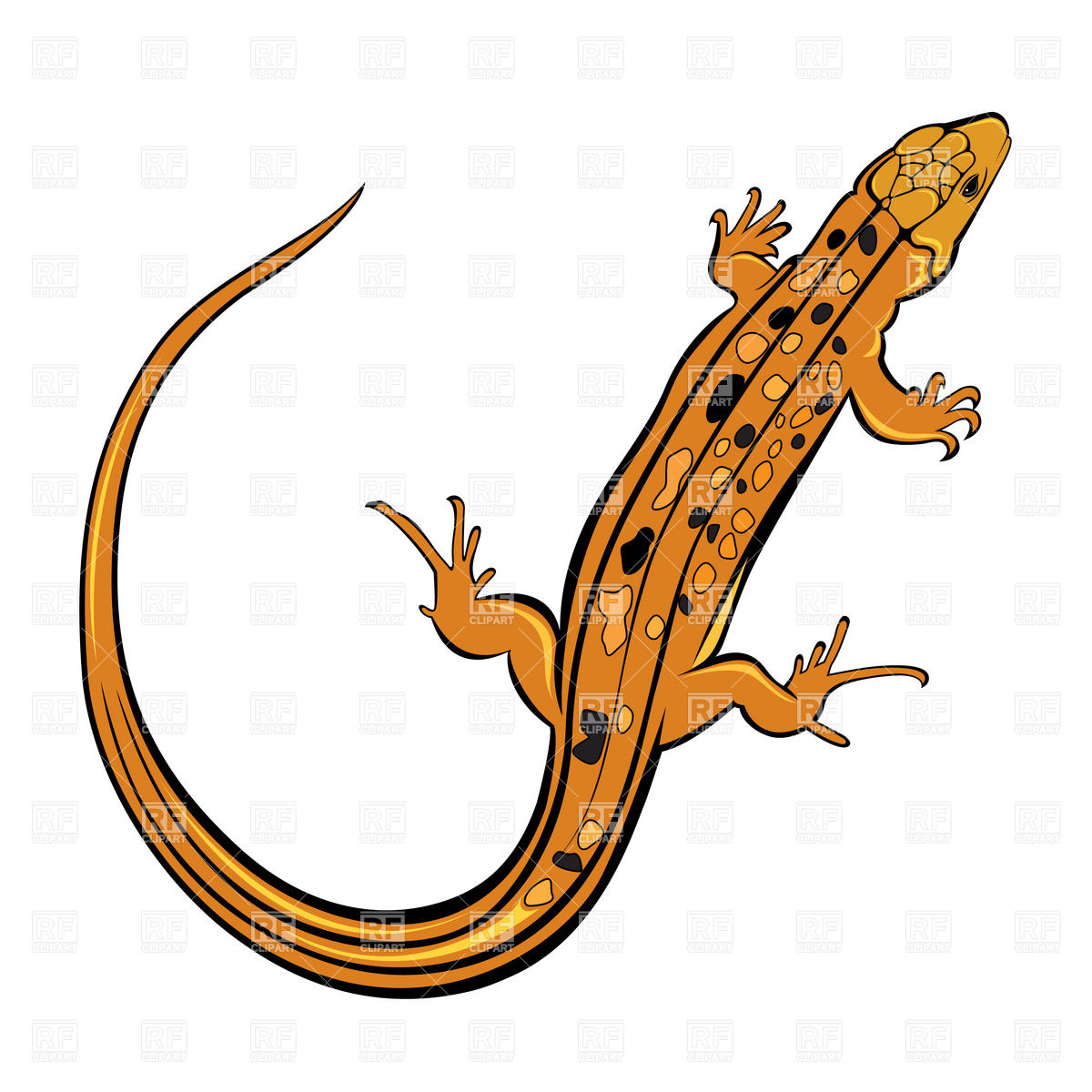 1200x1200 Orange Gecko Lizard Royalty Free Vector Clip Art Image