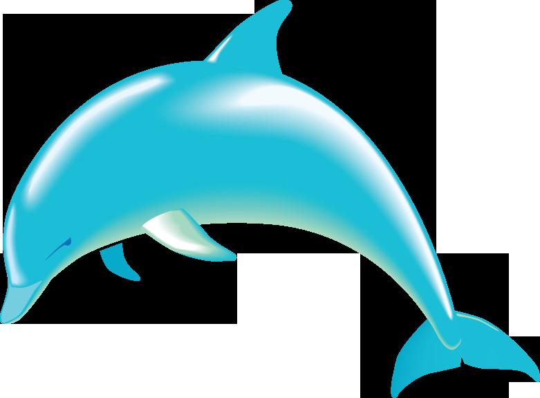 781x575 Bottlenose Dolphin Clipart Ocean Animal