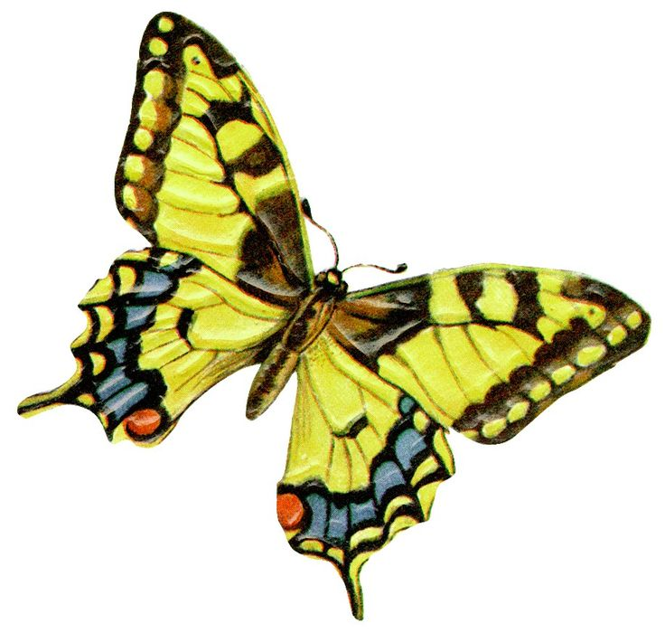 photograph regarding Printable Butterflies identified as No cost Printable Butterfly Clipart at  Cost-free