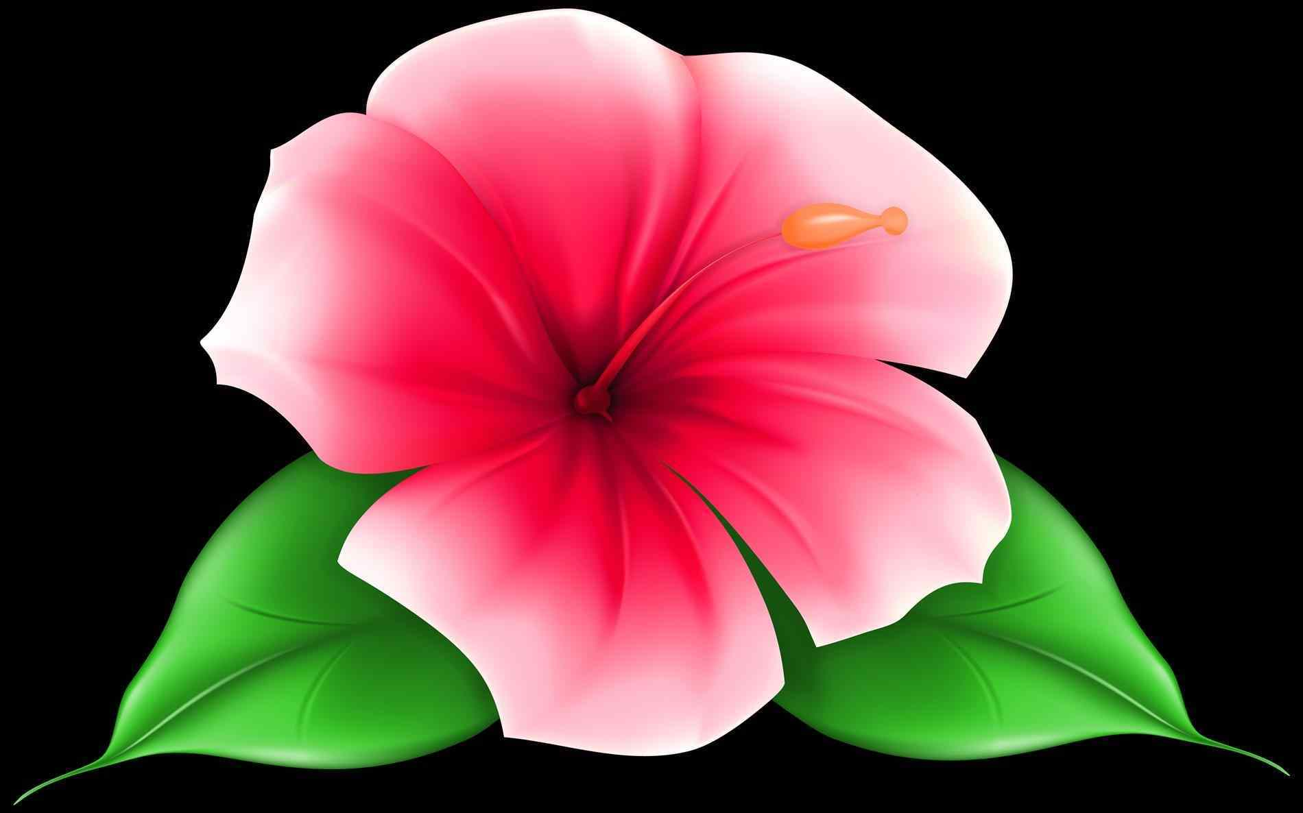 Free printable flower clipart at getdrawings free for personal 1900x1186 download clip art on hawaii flower ley collection hawaii hawaiian izmirmasajfo