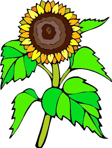 445x589 Sunflower Clip Art Free Printable Clipart 2 6