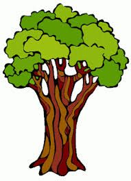 191x264 Image Result For Rainforest Trees Art Rainforest Trees