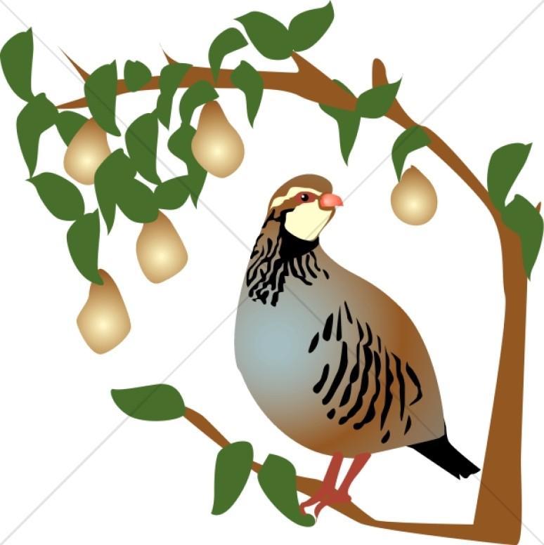 774x776 Partridge In A Pear Tree Clip Art
