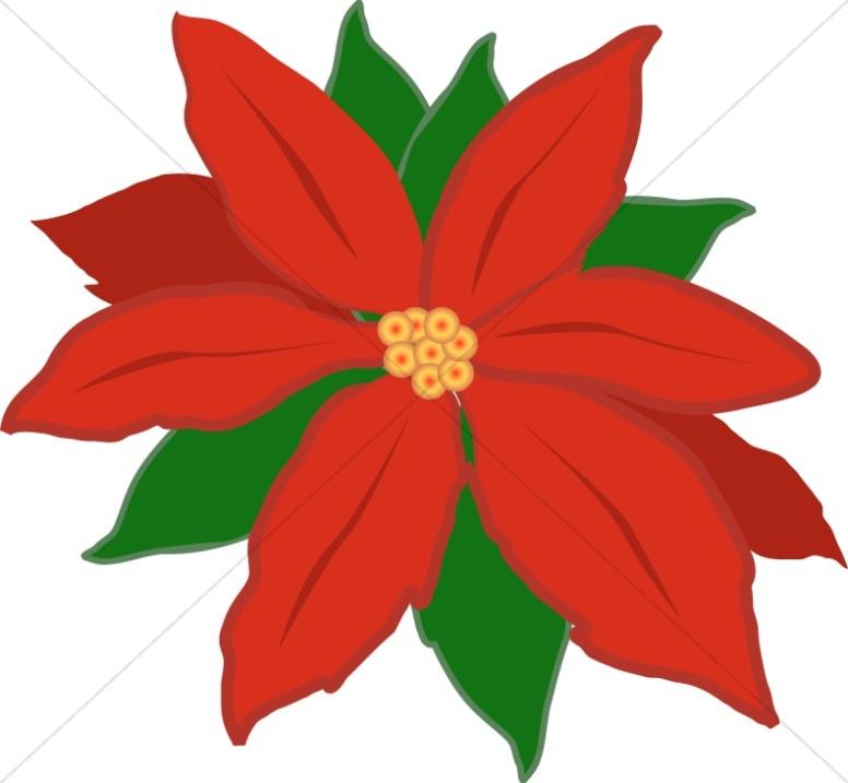 776x717 Poinsettia Clipart Red Poinsettia Flower Religious Christmas