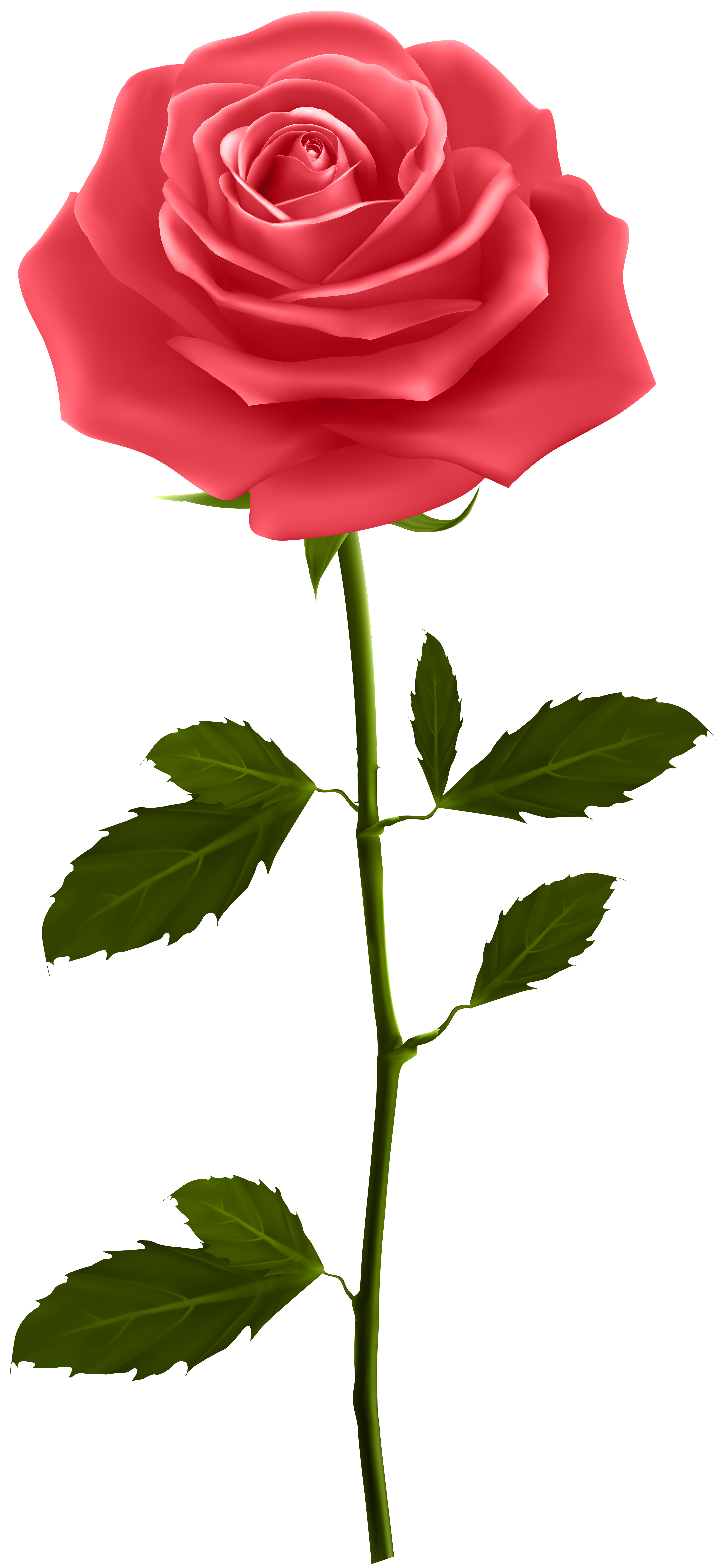 3706x8000 Red Rose With Stem Png Clip Artu200b Gallery Yopriceville