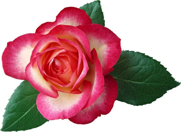 600x438 199 Best Png Images On Art Flowers, Artificial