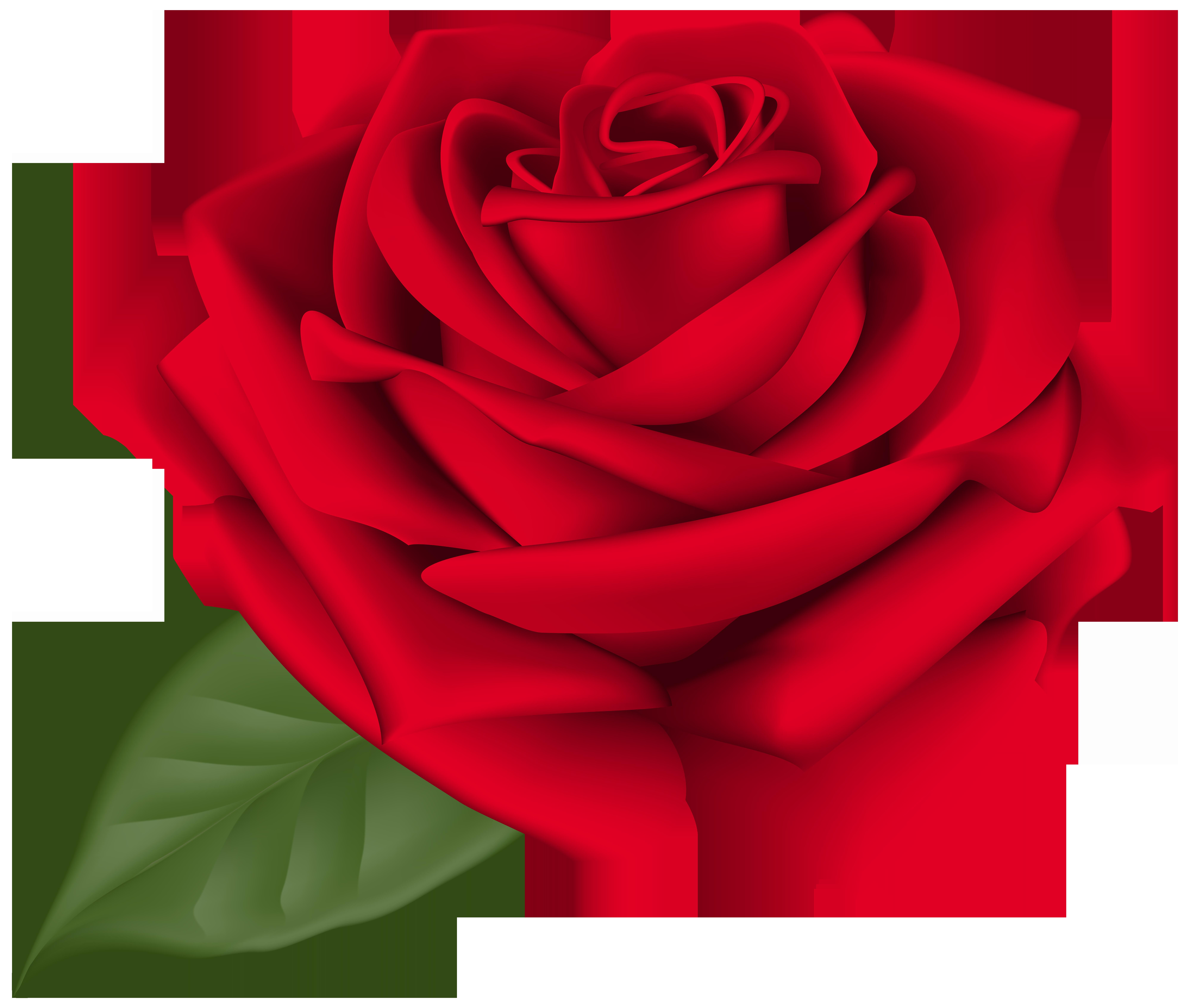 8000x6777 Rose Red Transparent Png Clip Art Imageu200b Gallery Yopriceville