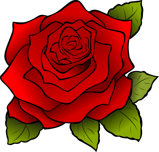 555x529 Roses Free To Use Cliparts Deby Flower Images
