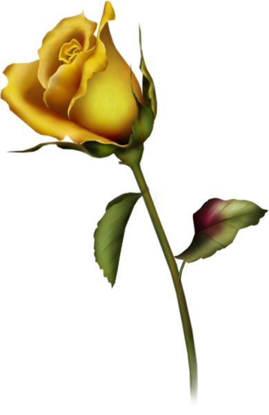 390x600 Yellow Rose Bud Clip Art Gallery Free Clipart Roses Png