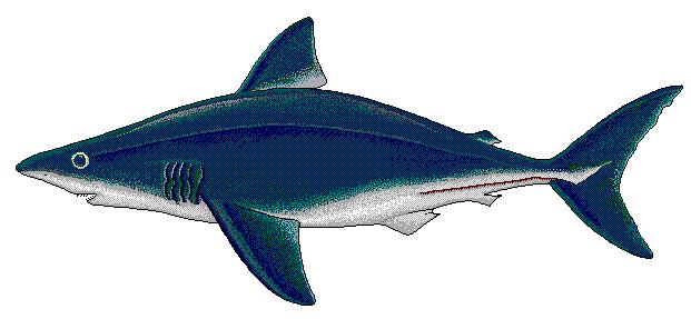 621x287 Free Shark Clipart