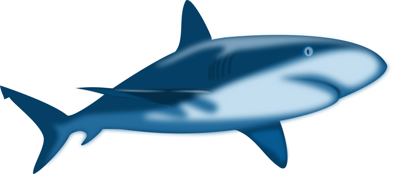 800x355 Free Shark Clipart Imagesclipartpandashark Clip Art Shark Clipart