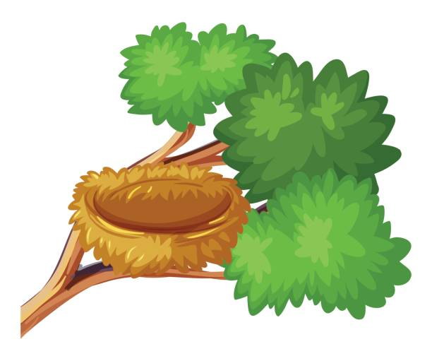 612x511 Collection Of Bird Nest In Tree Clipart High Quality, Free